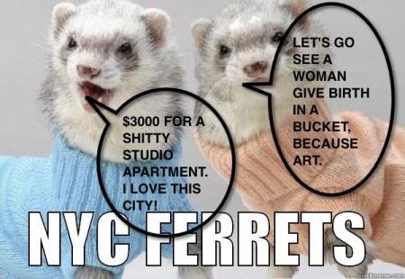 NYC Ferrets