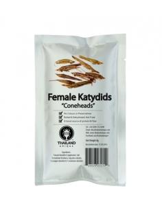female-katydids-coneheads-600x800.jpg